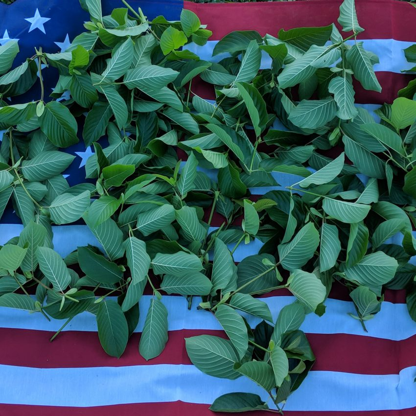 Red Vein Malay Kratom leaf for sale freeship United States