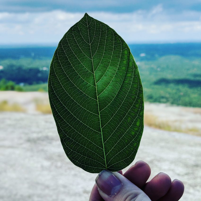 Red Vein Malay Kratom leaf free ship